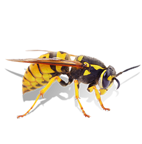 wasp in bethesda maryland