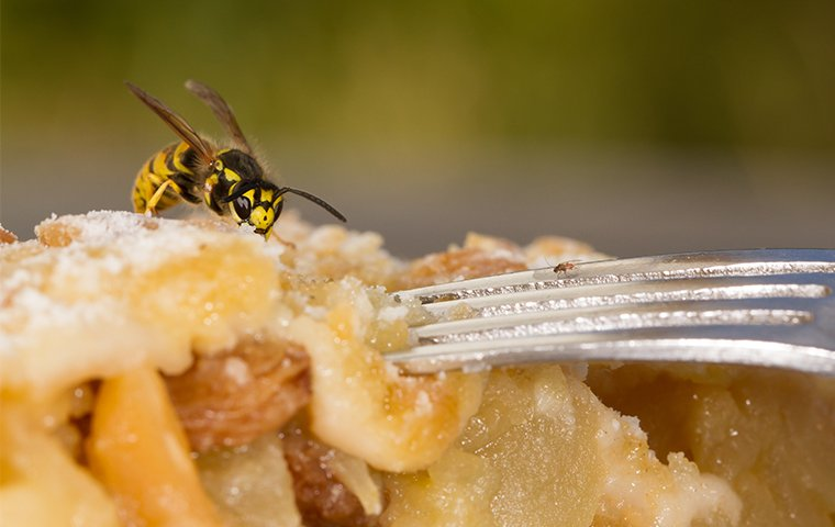 a wasp crawling on apple pie at a home in washington dc