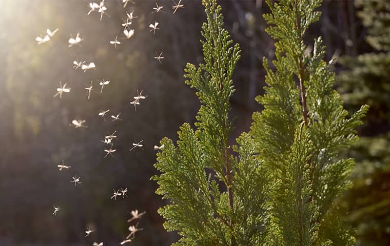 a swarm of mosquitoes outside in east orange new jersey