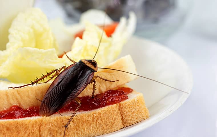 a cockroach crawling on a sandwich inside of a new jersey residential kitchen