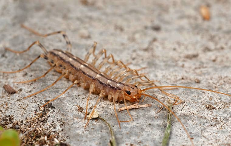 a house centipede crawling outside of a home in passaic new jersey