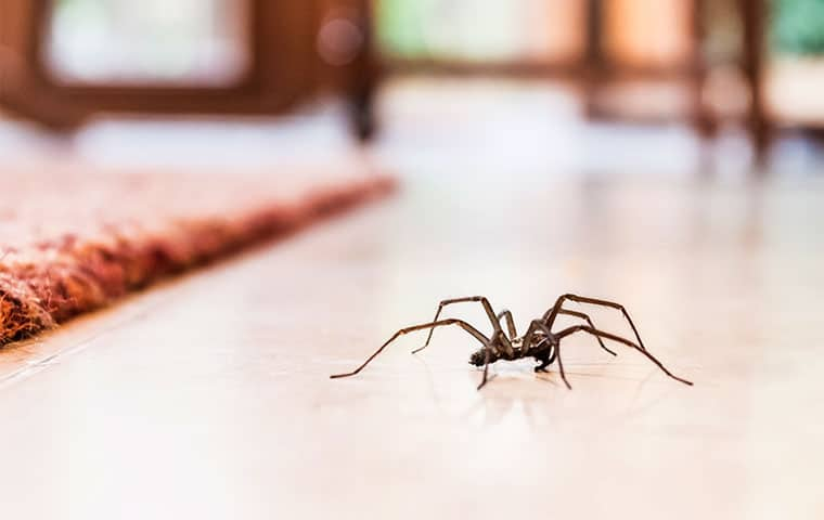 a house spider crawling on a table in butler new jersey