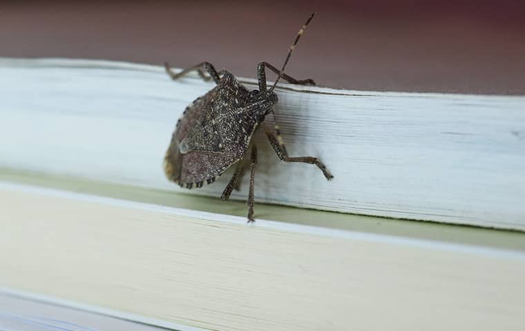 a stink bug crawling on a stack of books inside a new jersey home