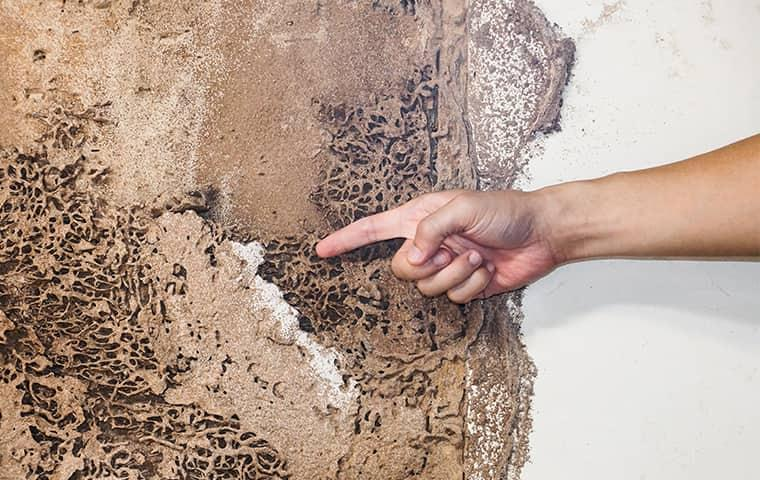 a technician pointing out termite damage in a new jersey home