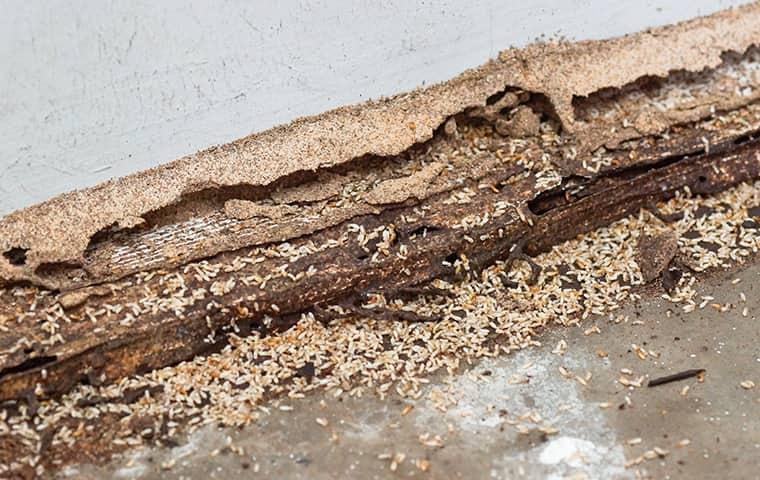 damage created by termites in a new jersey attic