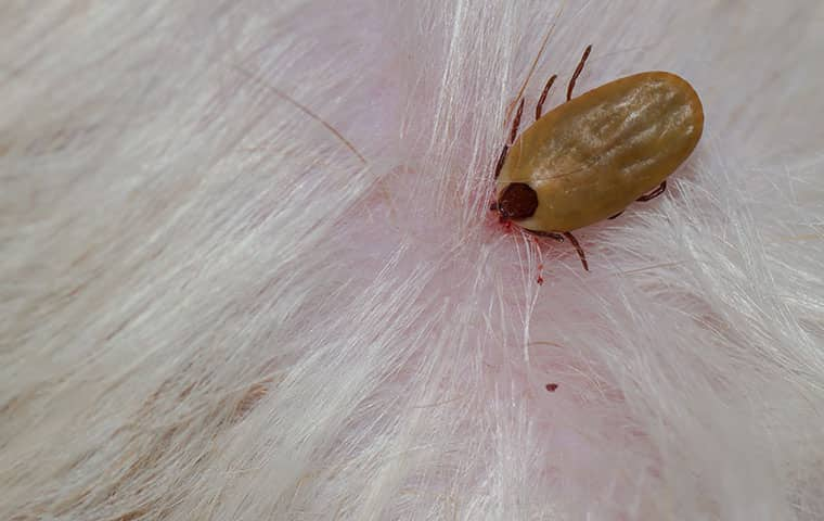 a tick biting a persons head in mahwah new jersey