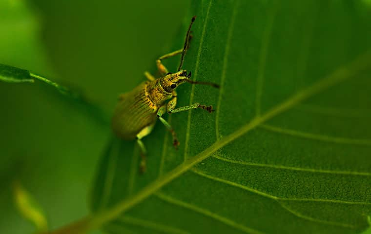 an elm beetle on a plant outside a home in rifle colorado