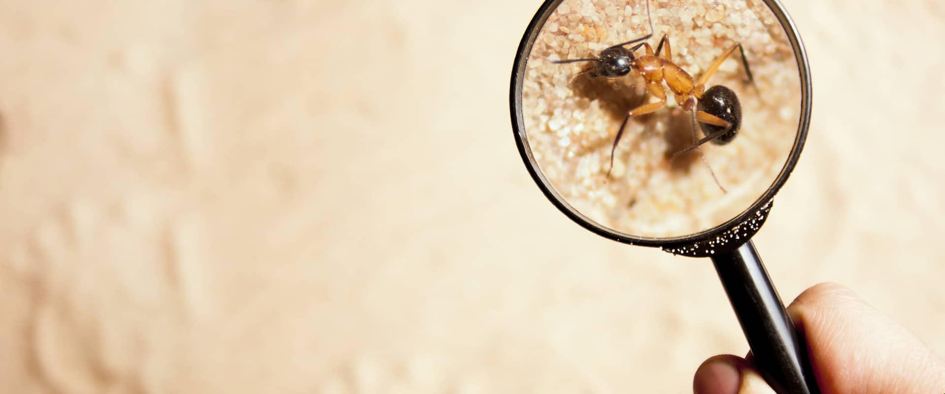 an ant being viewed through a magnifying glass in vail colorado