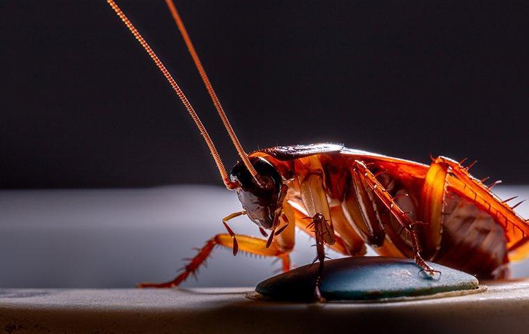 cockroach in the dark