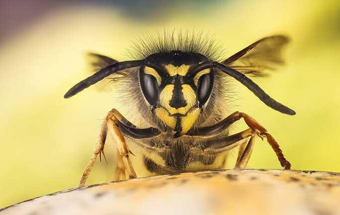 close up view of wasp head