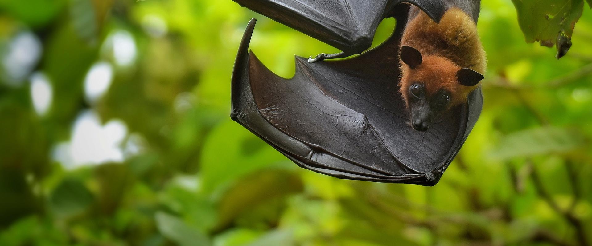 bats flying in a line