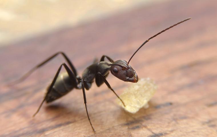 an ant on wood floor