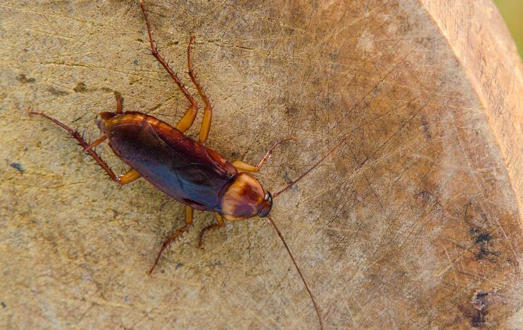 a cockroach on a log