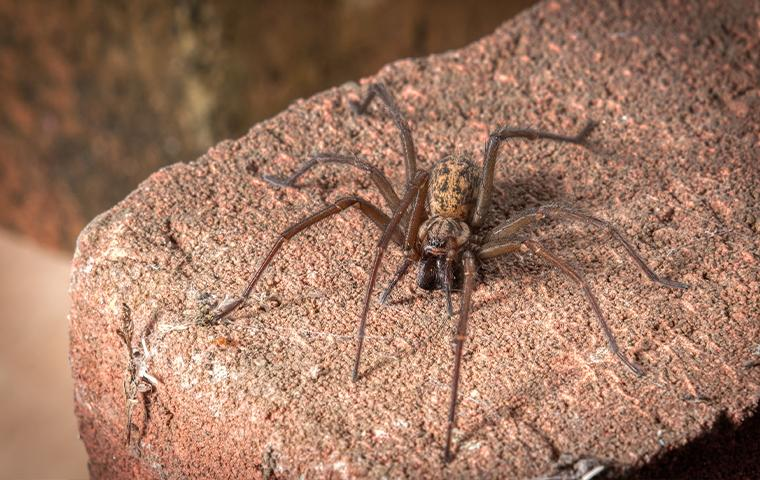 a spider on a rock