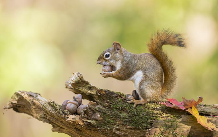 a squirrel on a branch