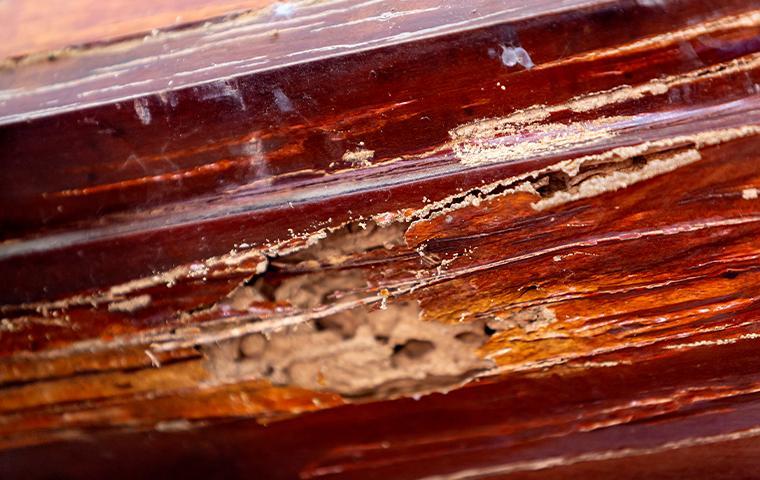 termite damage of wood