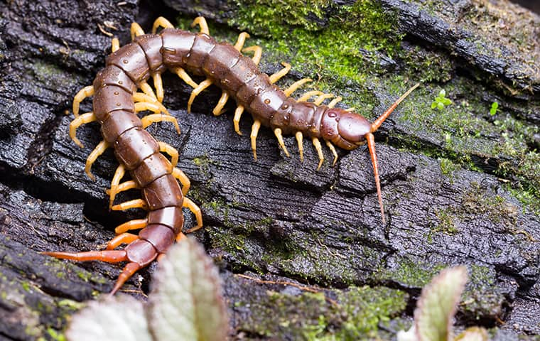 a milipede on a log