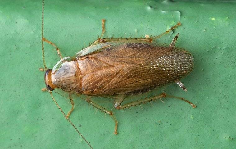 a german cockroach crawling in a basement