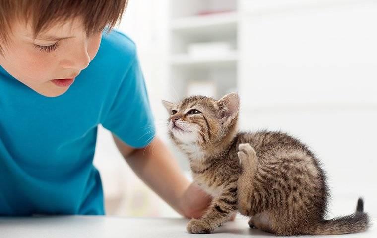 cat flea pet scratching