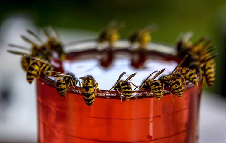 several wasps on top of a cup