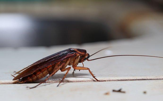 a cockroach on white countertop