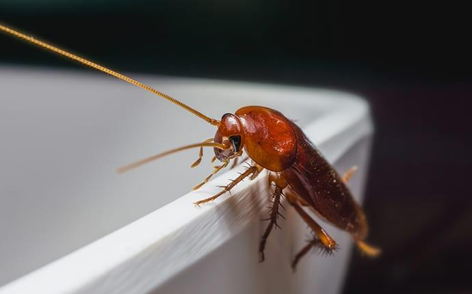 a cockroach in a houston texas commercial kitchen