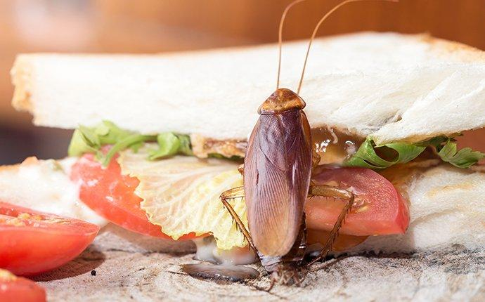 a cockroach on food in a kitchen