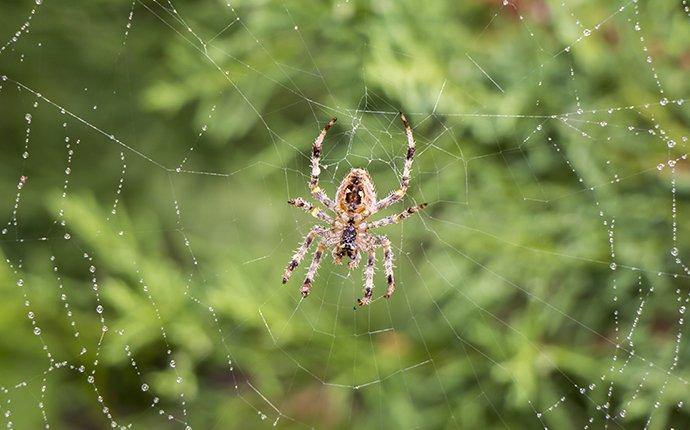 garden spider hanging on a web outside a houston tx home
