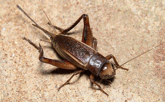 a cricket inside a home