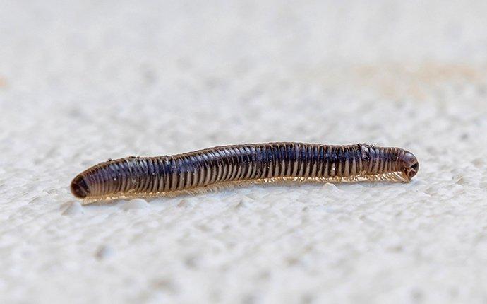 a millipede crawling on a basement floor