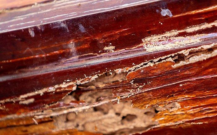 termite damage on wooden trim