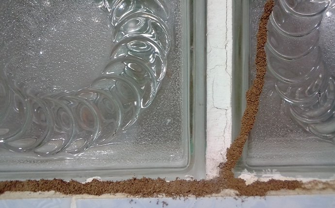 termite mud tubes built along the windows of a dallas tx home