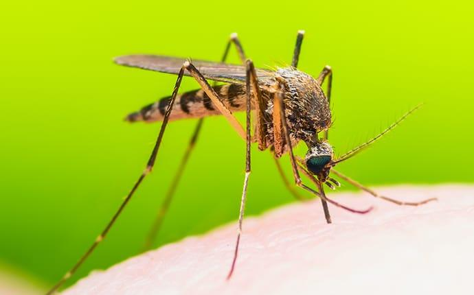 a mosquito biting a burleson texas resident