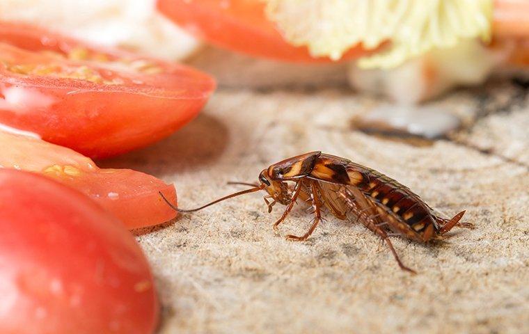 cockroach found in carrollton