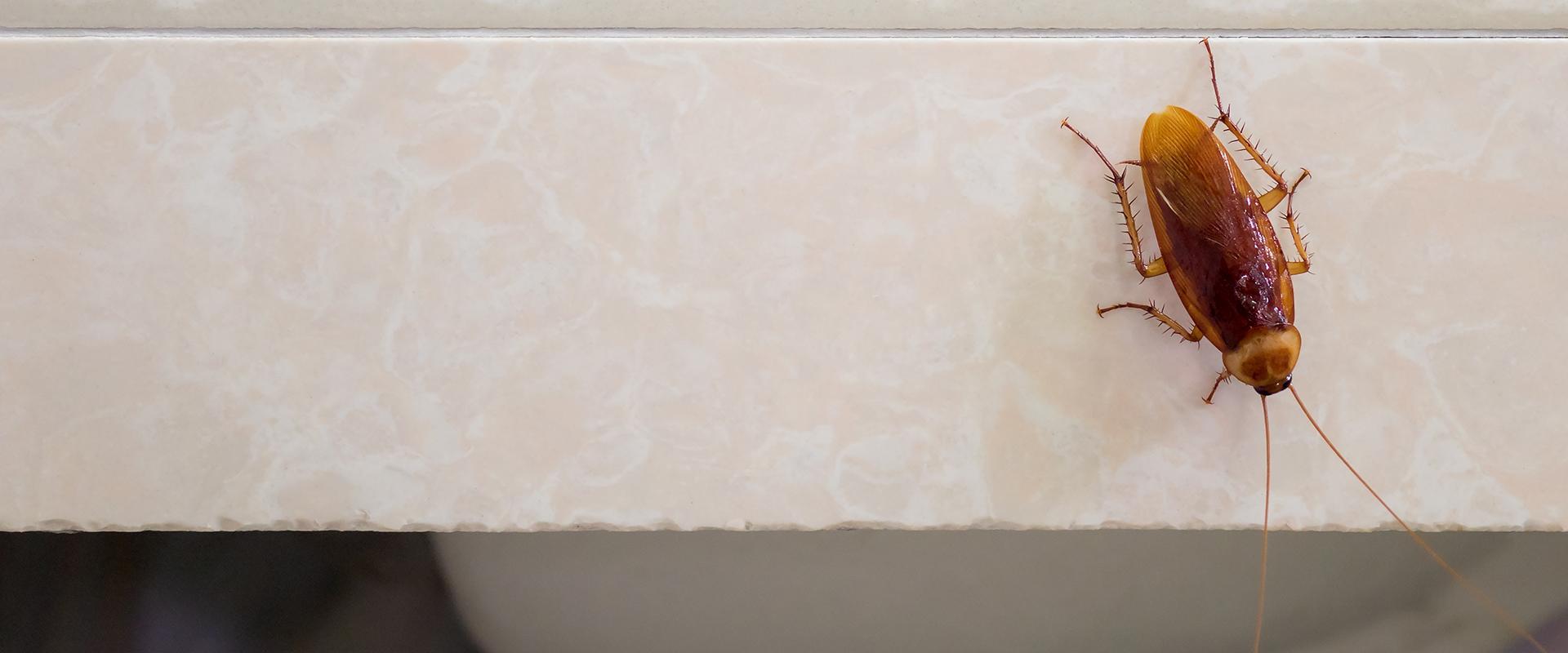 cockroach crawling on bathroom sink