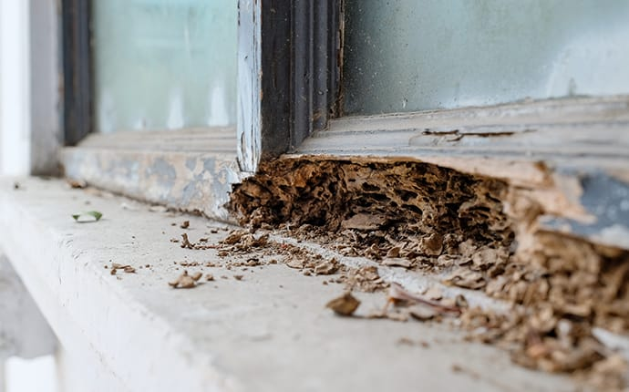 costly termite damage to the exterior of a frisco tx home