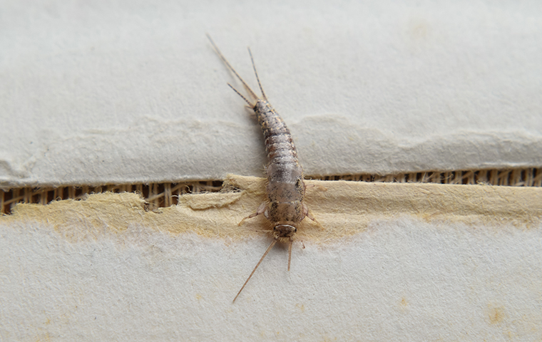 silverfish damaging a book in magnolia tx