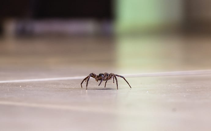 common house spider crawling across the floor of a kingwood tx home