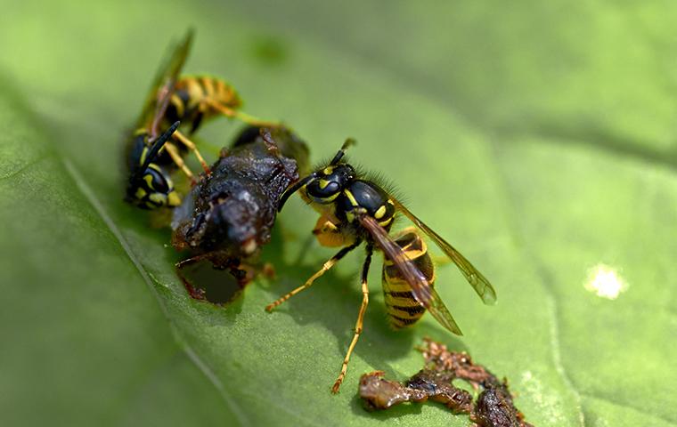 wasps on a leaf in a rockwall tx yard