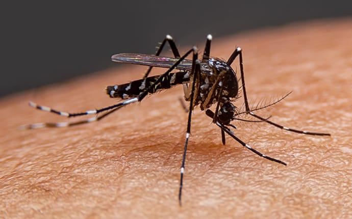 a mosquito biting a resident of spring texas
