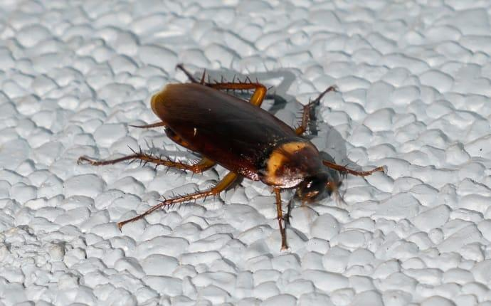 a cockroach crawling in a home in willis texas