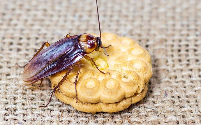 cockroach crawling on a cookie