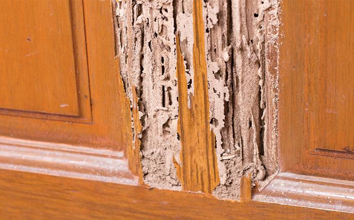 visible termite damage in a house