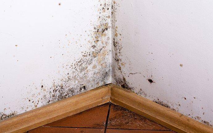 mold on walls in a home without moisture control