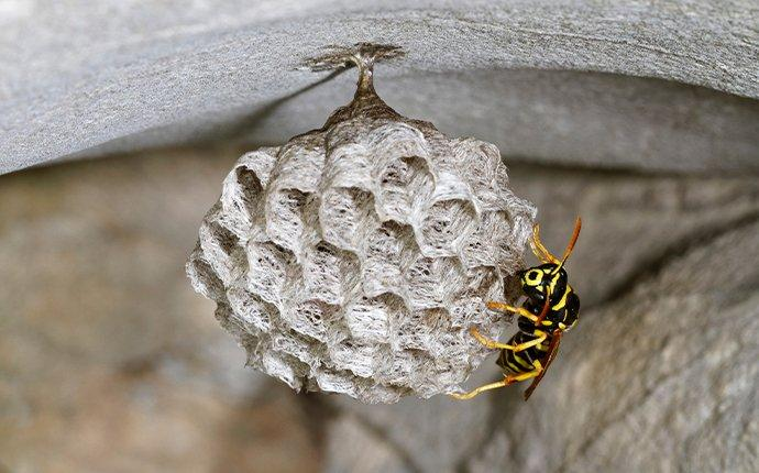 a paper wasp crawling on a nest