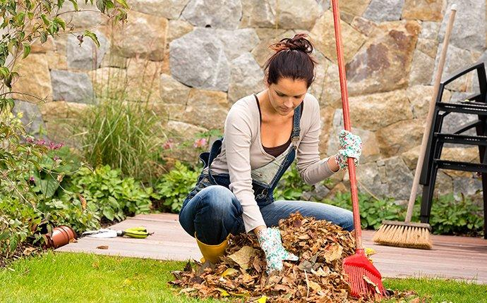spring cleaning yard for pest prevention