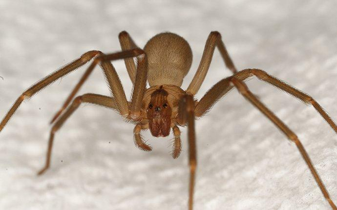 Dangerous Spiders In South Carolina Learn More About Dangerous Spiders