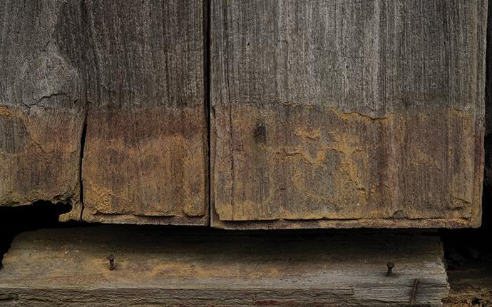 damage to wood caused by powder post beetles