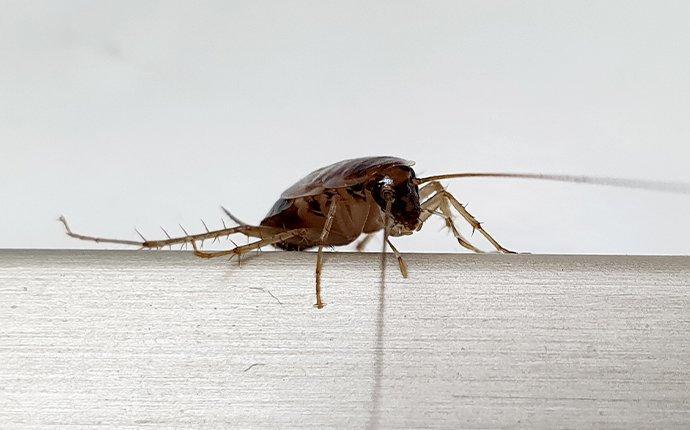 german cockroach on concrete