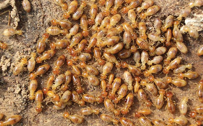 a large cluster of termites